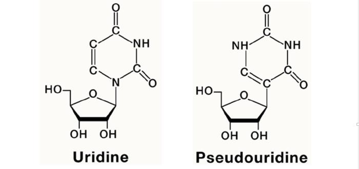 Links de structuur van Uridine, een van de vier bouwstenen van RNA; rechts het pseudo-uridine (zoek de verschillen) ter vervanging van uridine om RNA stabieler en minder immuunafstotend te maken, en meer eiwit te laten produceren.